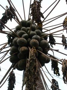 Religious Papayas